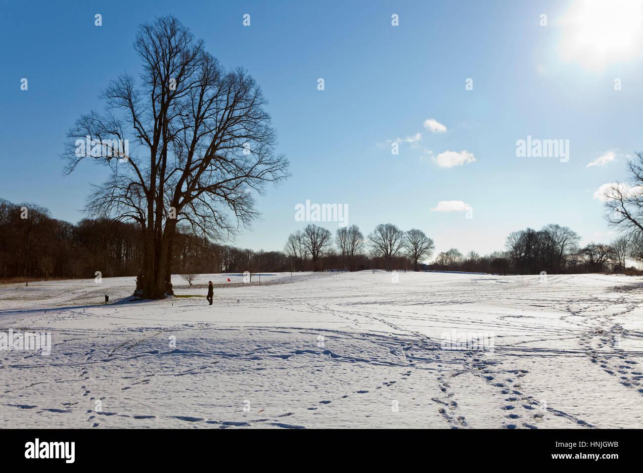 a-sunny-winter-landscape-a-blue-sky-bare
