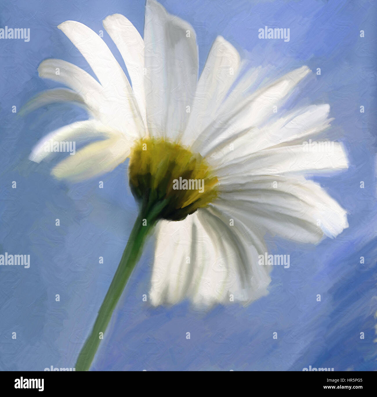 Watercolor oil paint of daisy white flower over the blue sky stock watercolor oil paint of daisy white flower over the blue sky izmirmasajfo Choice Image
