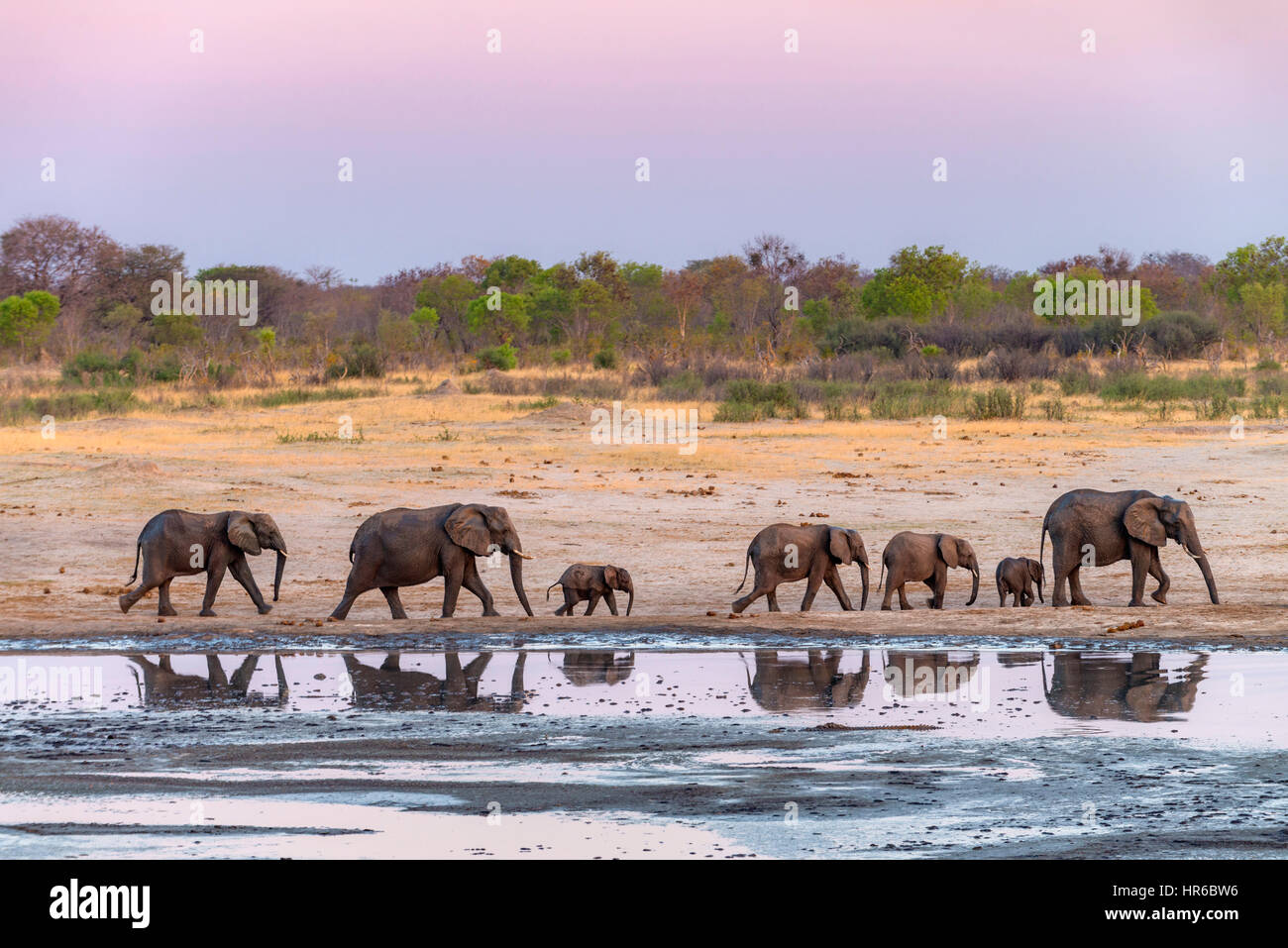 a-herd-of-elephants-is-reflected-in-a-wa