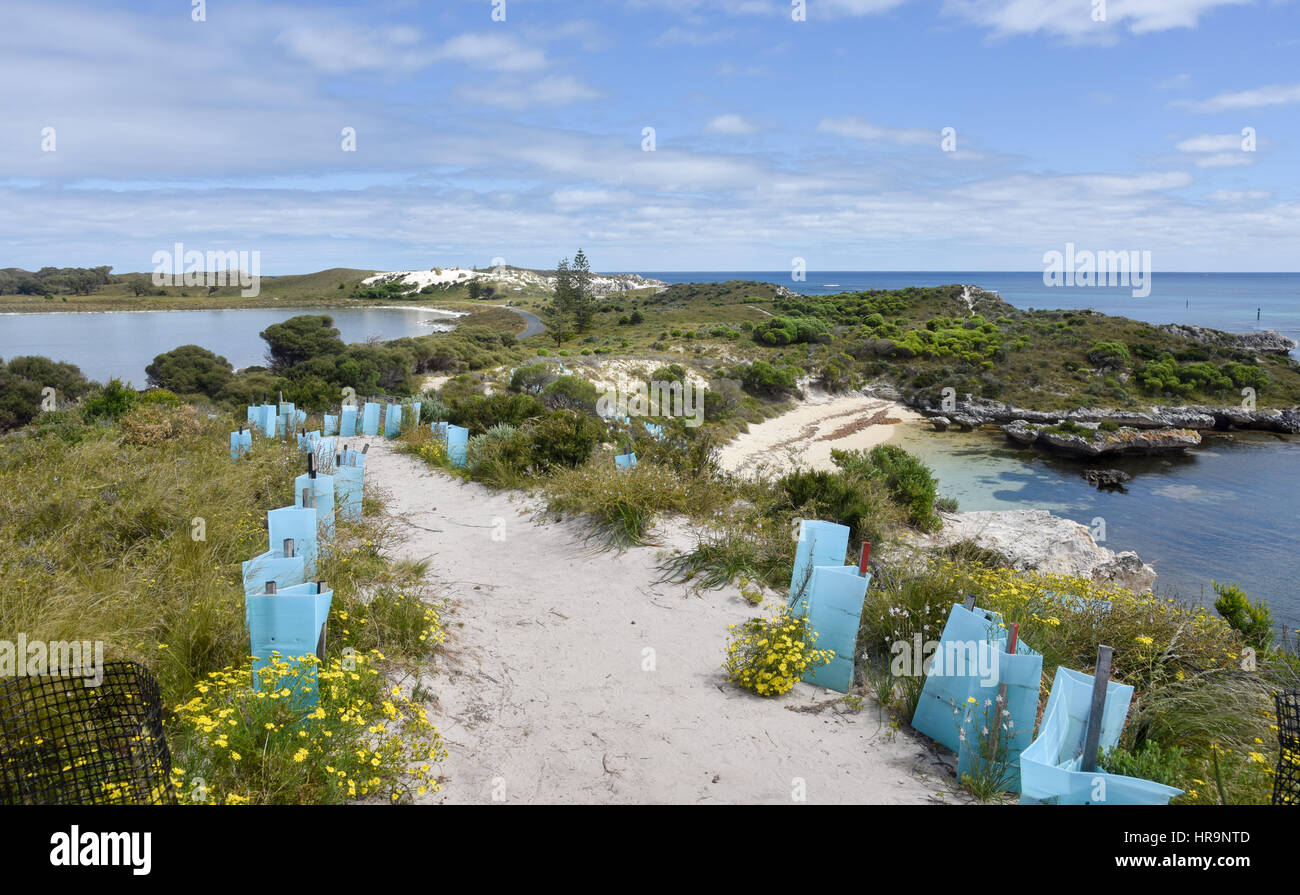 Footpath with fresh plantings overlooking both a lake and the Indian Ocean seascape with remote beach at Rottnest Stock Photo