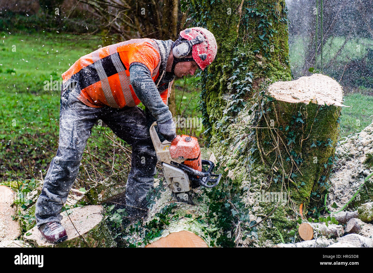 professional-tree-surgeon-cuts-down-a-rotten-tree-in-a-domestic-garden-HRG5D8.jpg