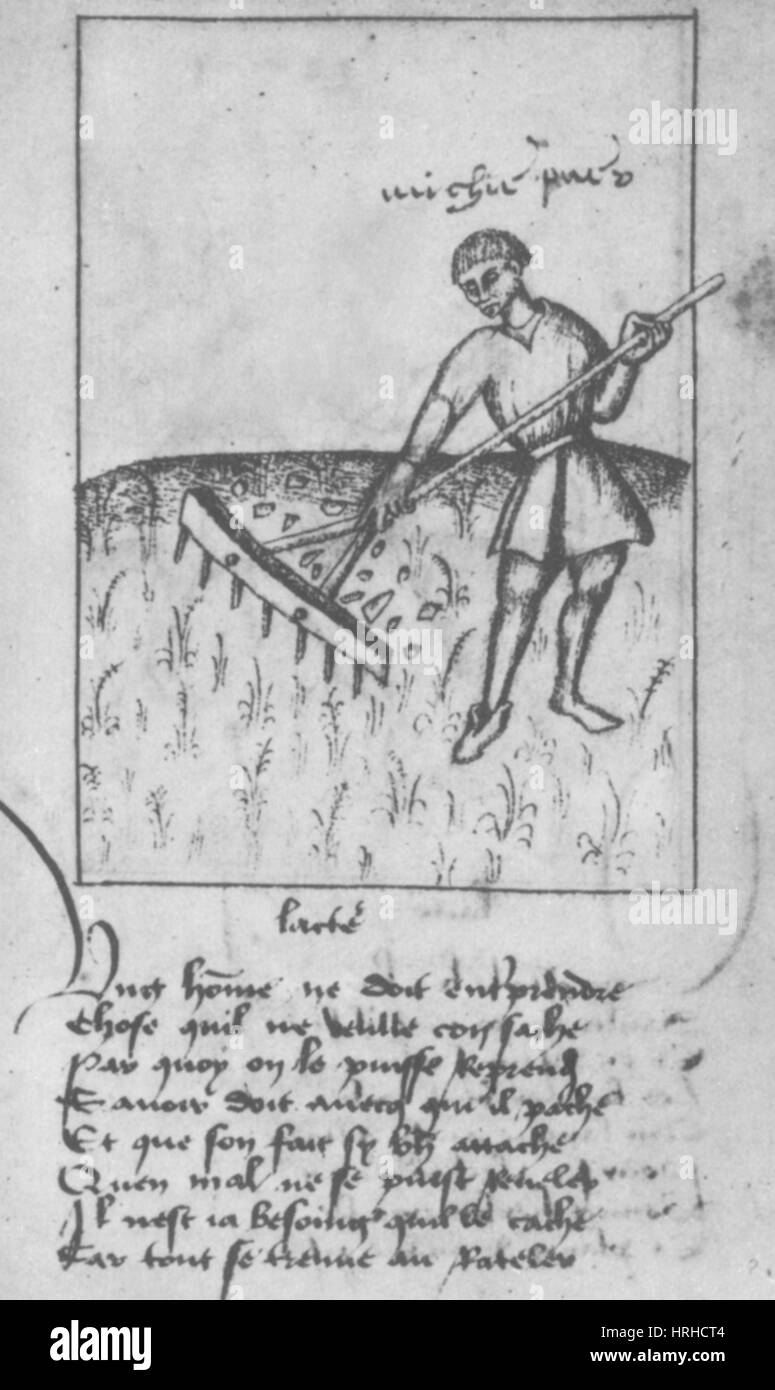 Agriculture, 15th Century - Stock Image