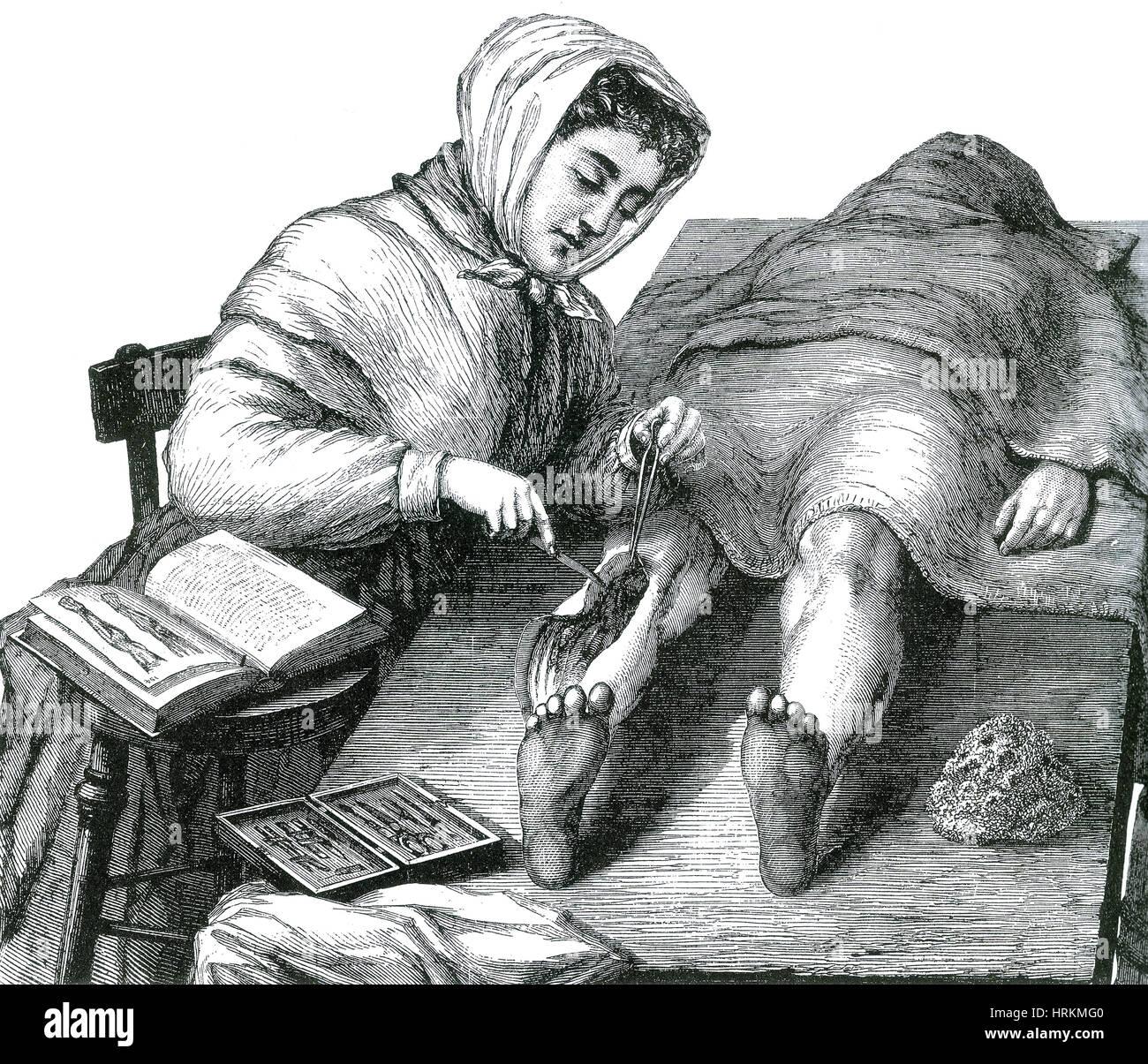 Anatomy Lesson 19th Century Stock Photos & Anatomy Lesson 19th ...