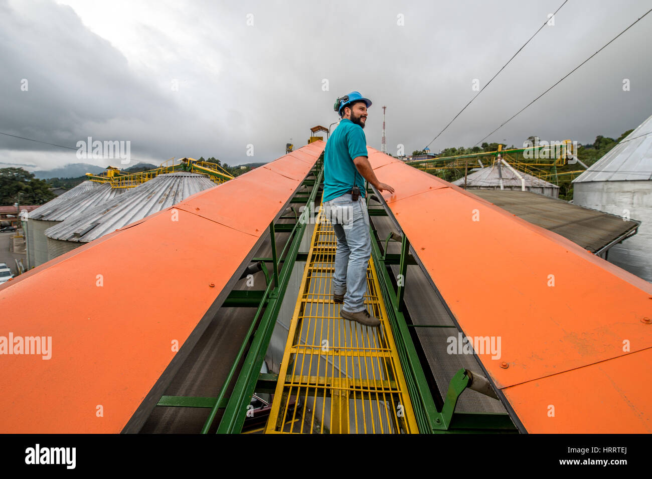 A coffee worker climbs to the top of a storage bin at a coffee plant ...