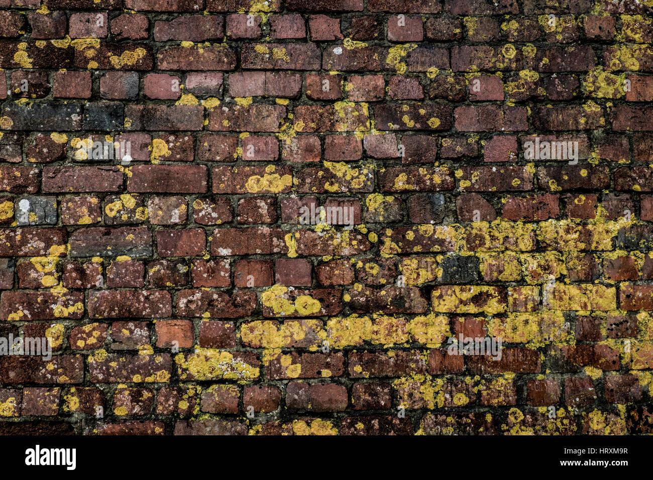 Lichen covered brick wall at Porthgain - Stock Image