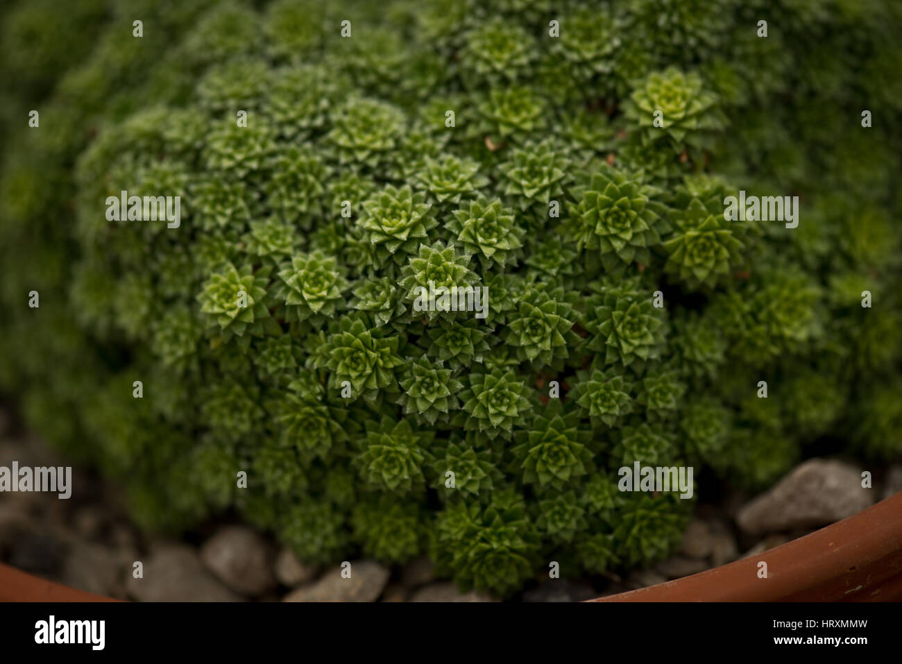Fractal plant growth - Stock Image