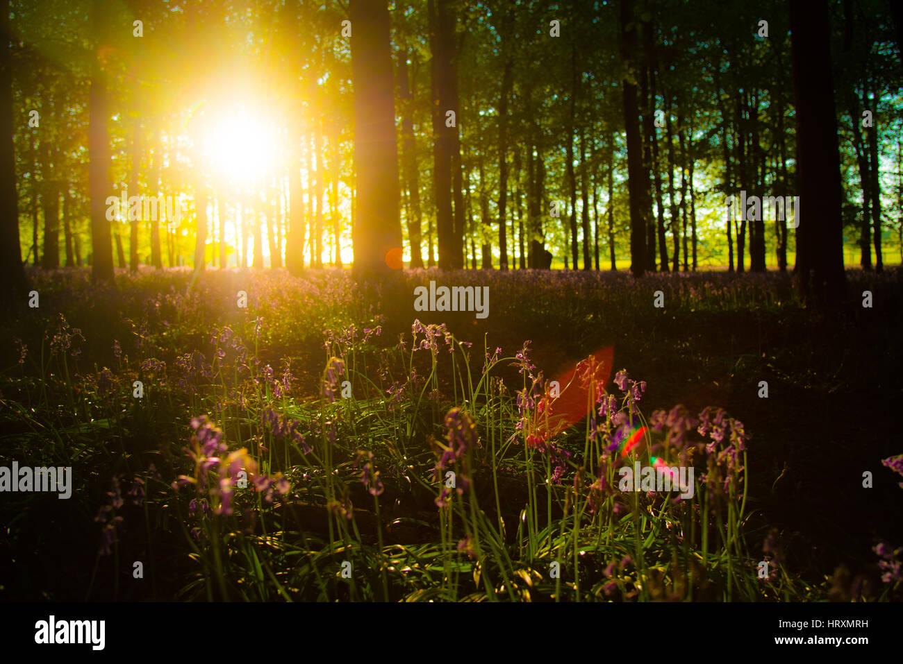 Natural landscapes - Stock Image