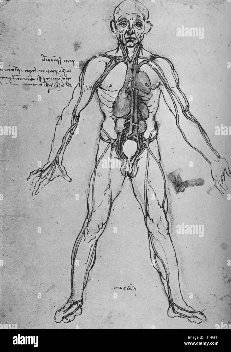 Man Drawn As An Anatomical Figure To Show The Heart Lungs And Main