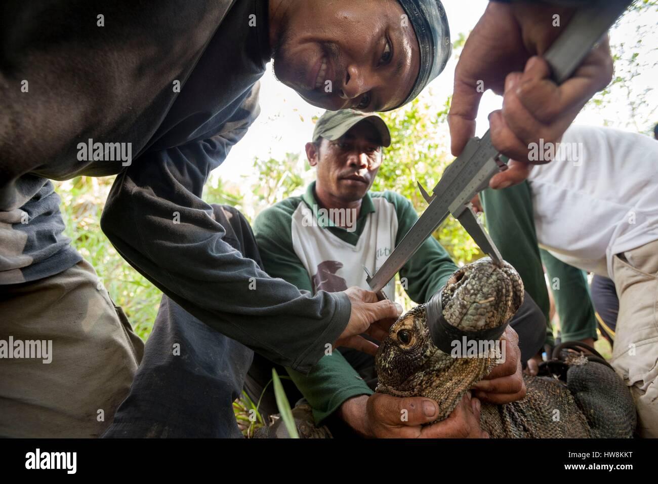 Indonesia, East Nusa Tenggara, Rinca Island, Komodo National Park listed as World Heritage by UNESCO, scientist Stock Photo
