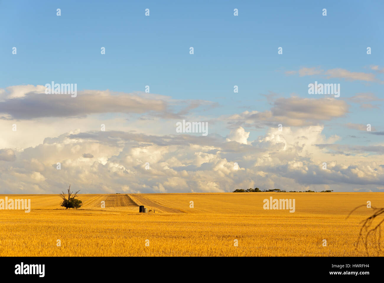 Wheatbelt of Western Australia, Harvested fields, Australia Stock Photo