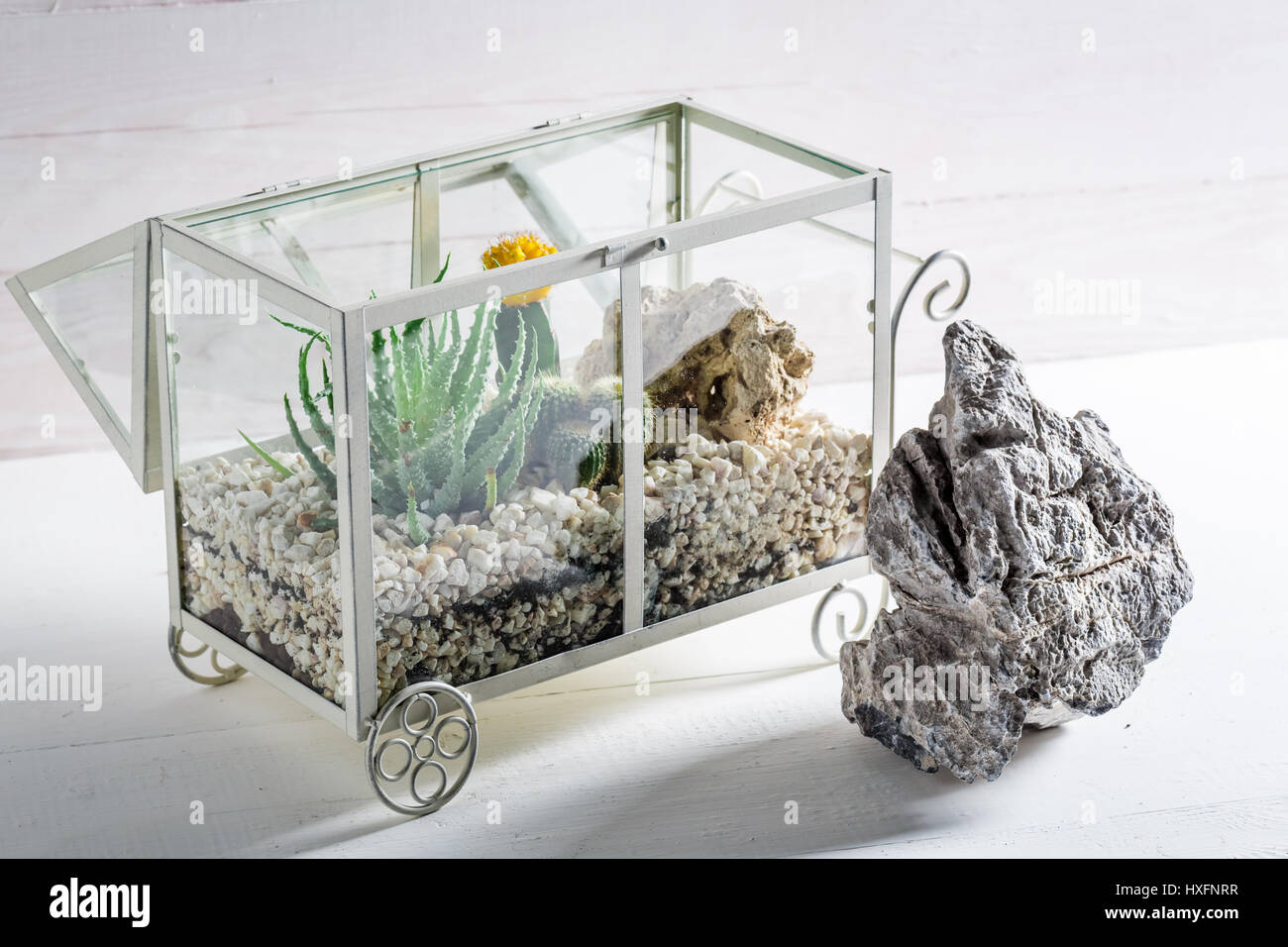 Small Terrarium With Live Cactus And Self Ecosystem Stock Photo
