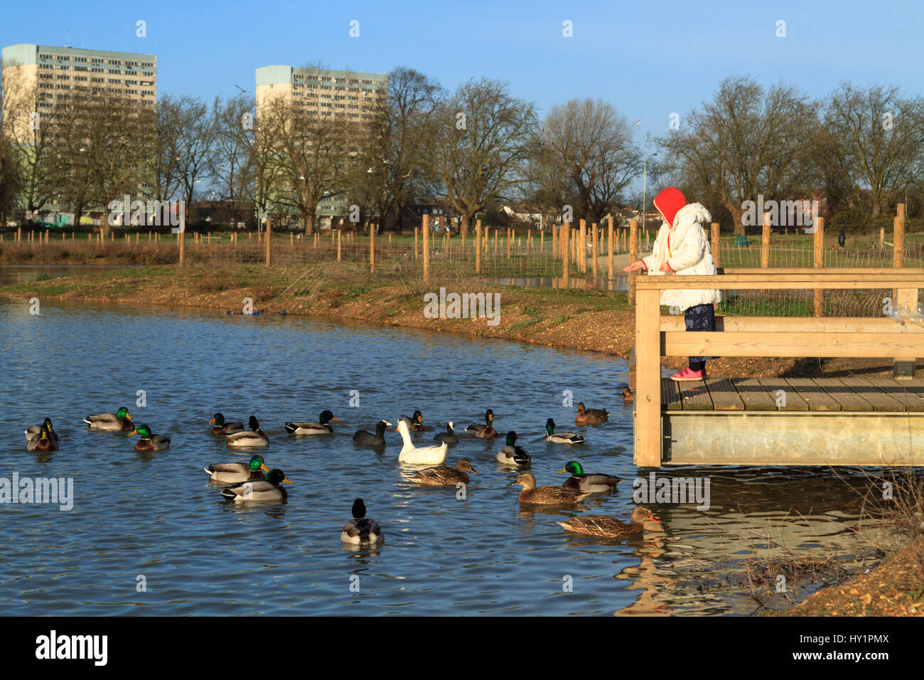 Young girl feeding ducks at a pond, Lakehouse park, wanstead flats, forest gate, london, uk Stock Photo