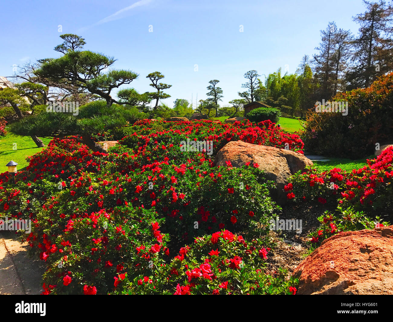 Beautiful Flowers And Trees In Japanese Garden Stock Photo