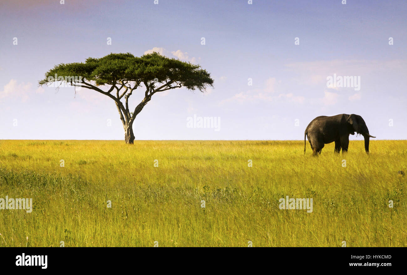 serengeti-tanzania-national-park-landsca
