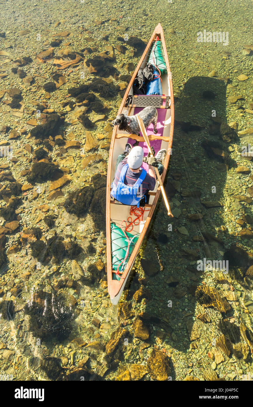 Canoeing Canoe in the Lake District, England, UK - overhead view of one man and his dog conoeing on the River Derwent, - Stock Image