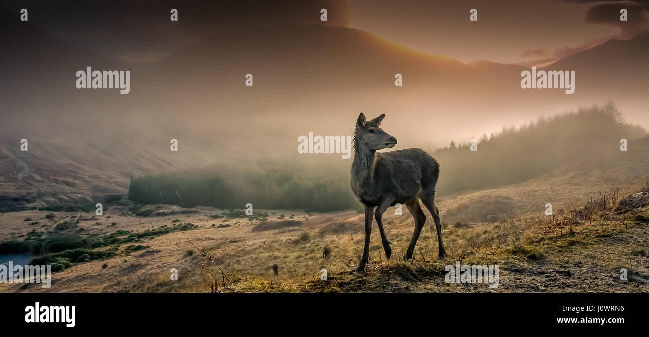 wild-roaming-deer-taken-one-beautiful-fr