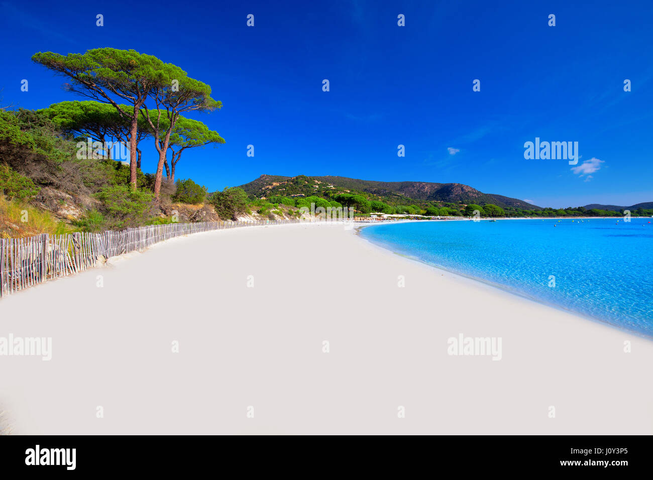 palombaggia-sandy-beach-with-pine-trees-and-azure-clear-water-corsica-J0Y3P5.jpg