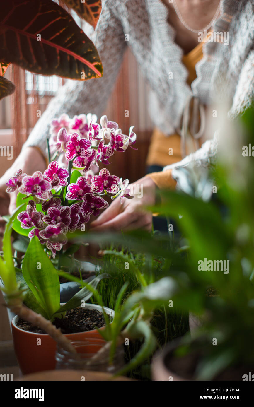 The woman caring for orchid flowers vertical - Stock Image