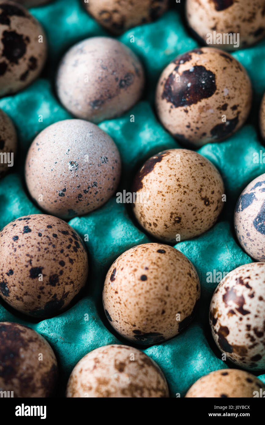 Quail eggs in the container vertical - Stock Image