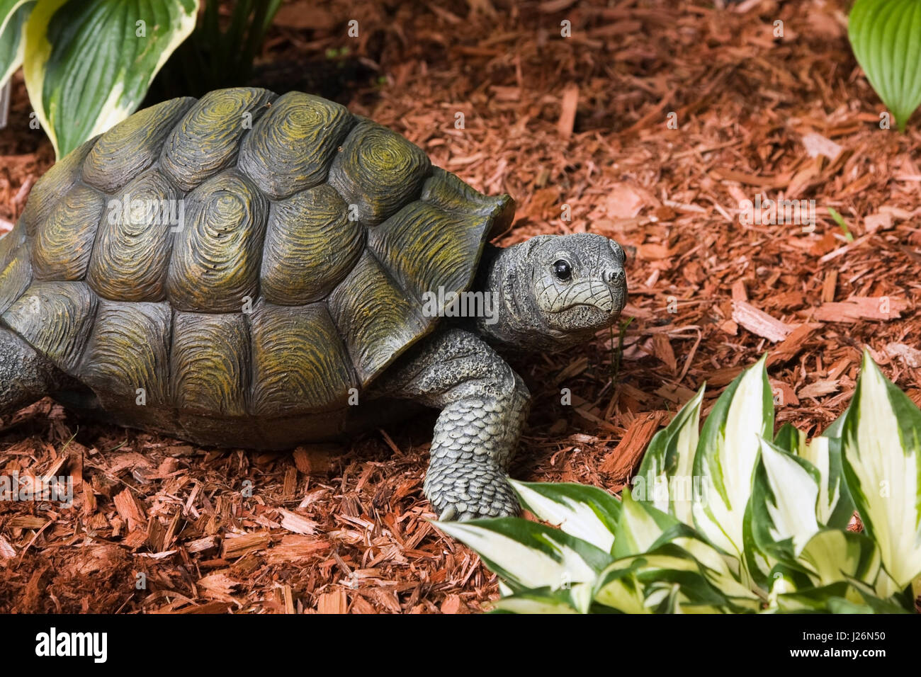 Turtle statue in a landscaped front yard garden in summer Stock ...