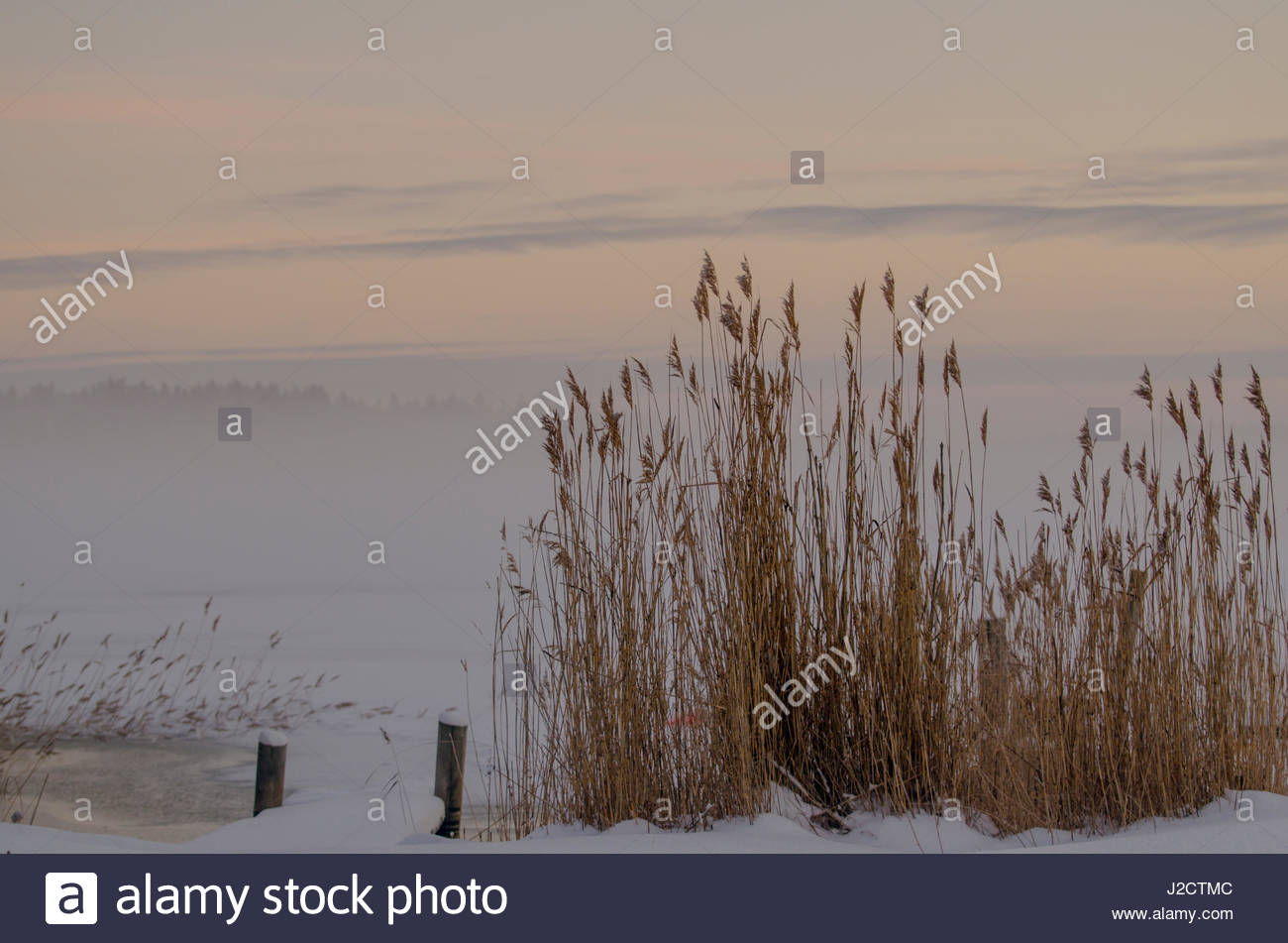 Heavy mist on the icy water, and reeds in winter. - Stock Image