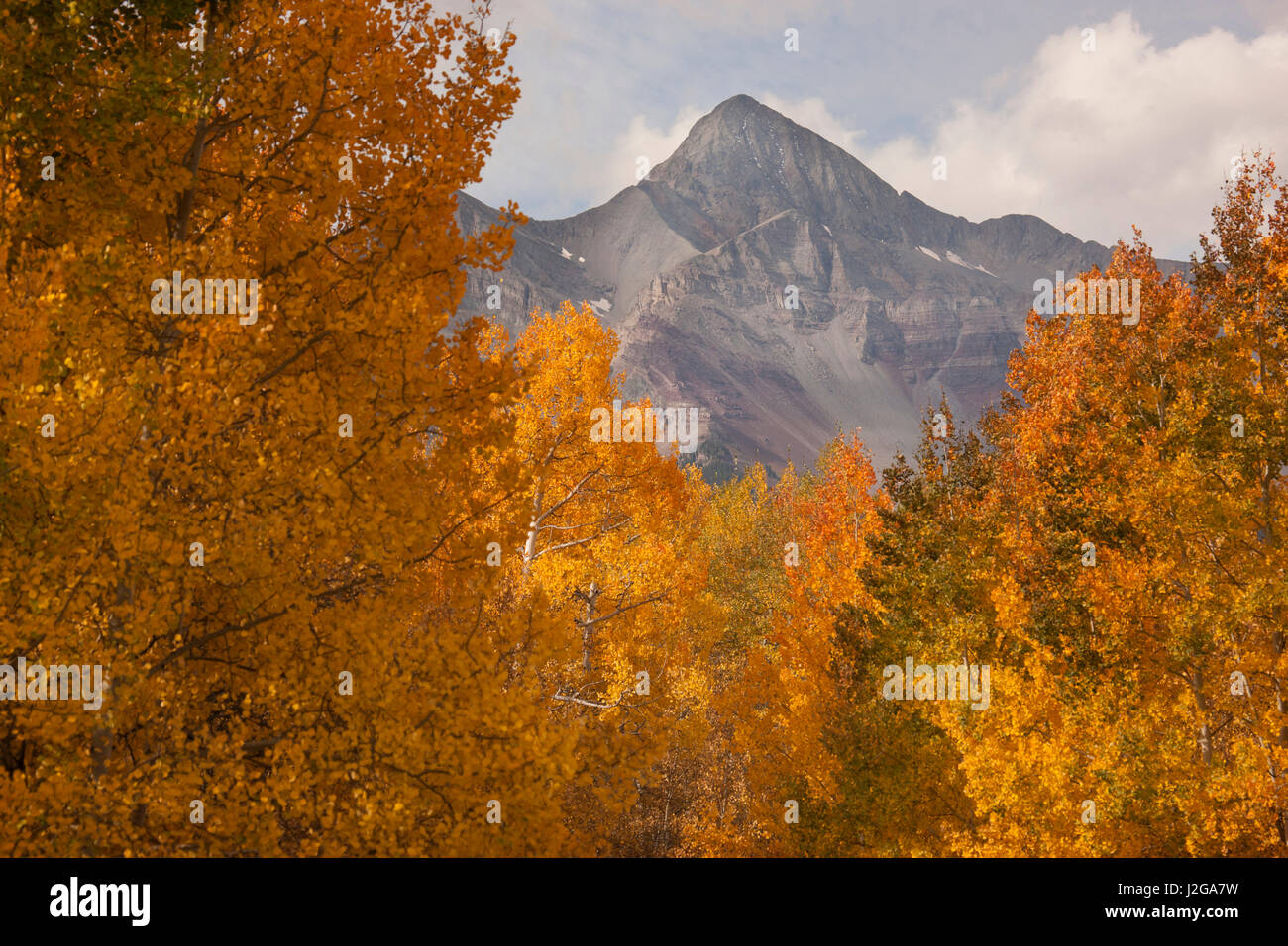 USA, Colorado, Uncompahgre National Forest. Wilson Peak and forest landscape. Credit as: Don Grall / Jaynes Gallery - Stock Image