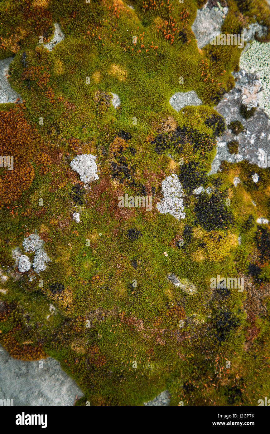 USA, Idaho. Close-up of moss-covered boulder. Credit as: Don Grall / Jaynes Gallery / DanitaDelimont.com - Stock Image