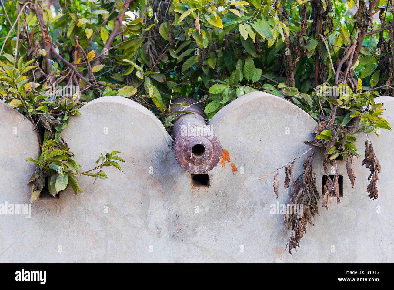 The barrel of an ancient cannon rests on top of a concrete wall surrounded by foliage. - Stock Image