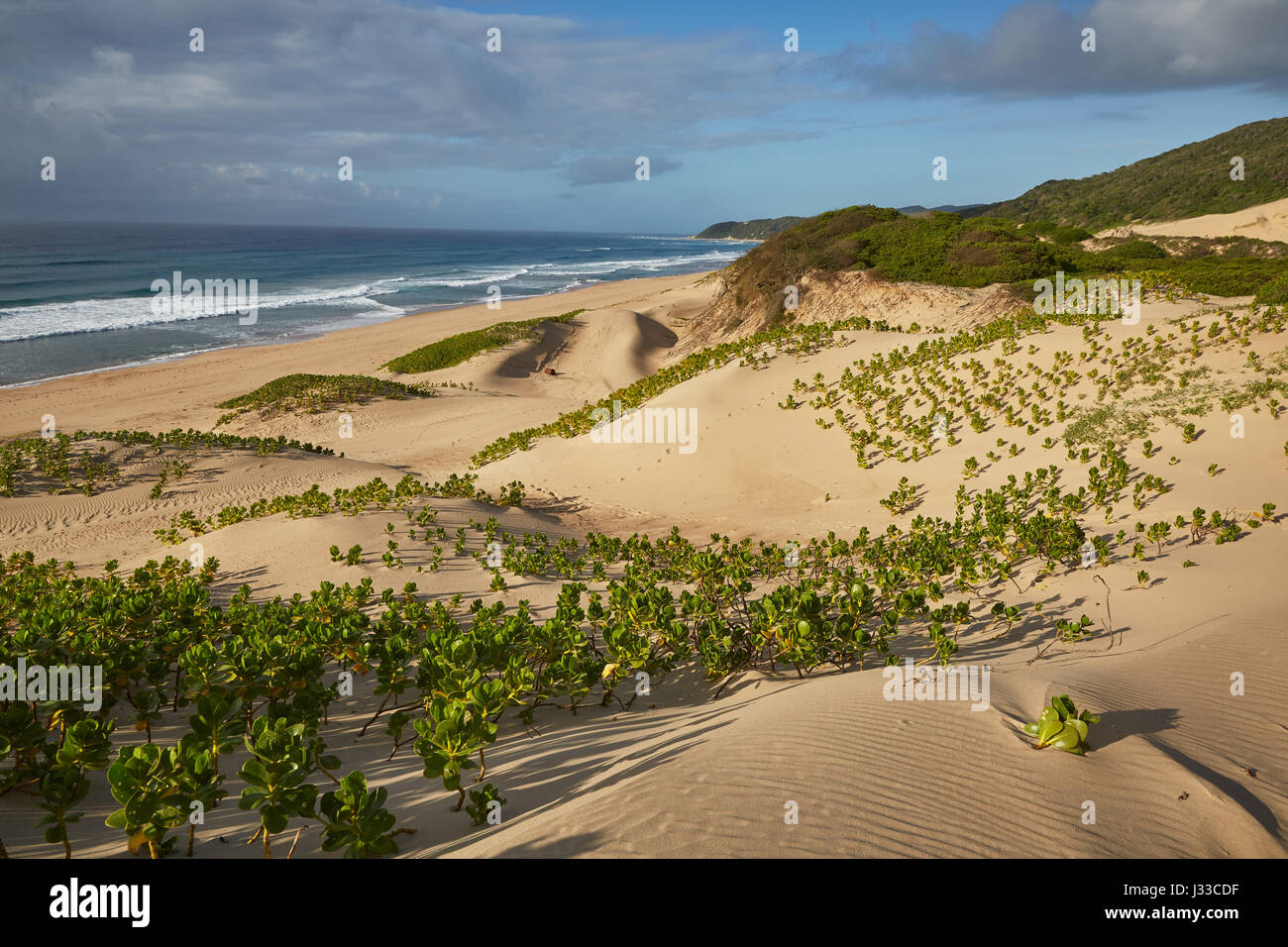 Dunes along the Indian Ocean in iSimangaliso-Wetland Park, South Africa, Africa - Stock Image