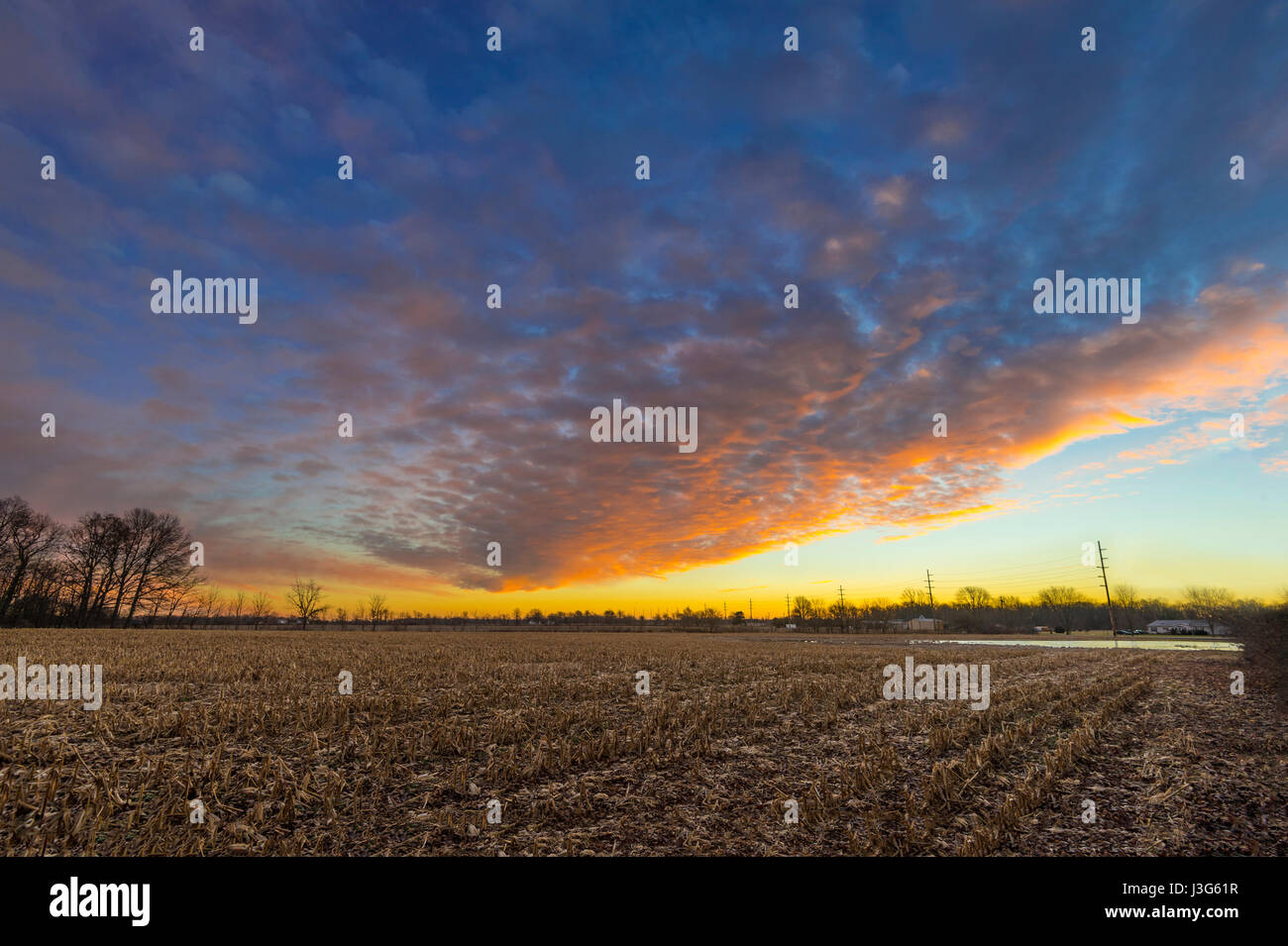 Cornfield At Sunrise, Indiana, USA - Stock Image