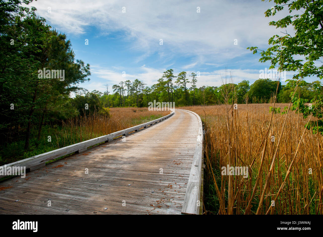usa-virginia-va-single-lane-wooden-bridge-on-jamestown-island-along-J3WWAJ.jpg