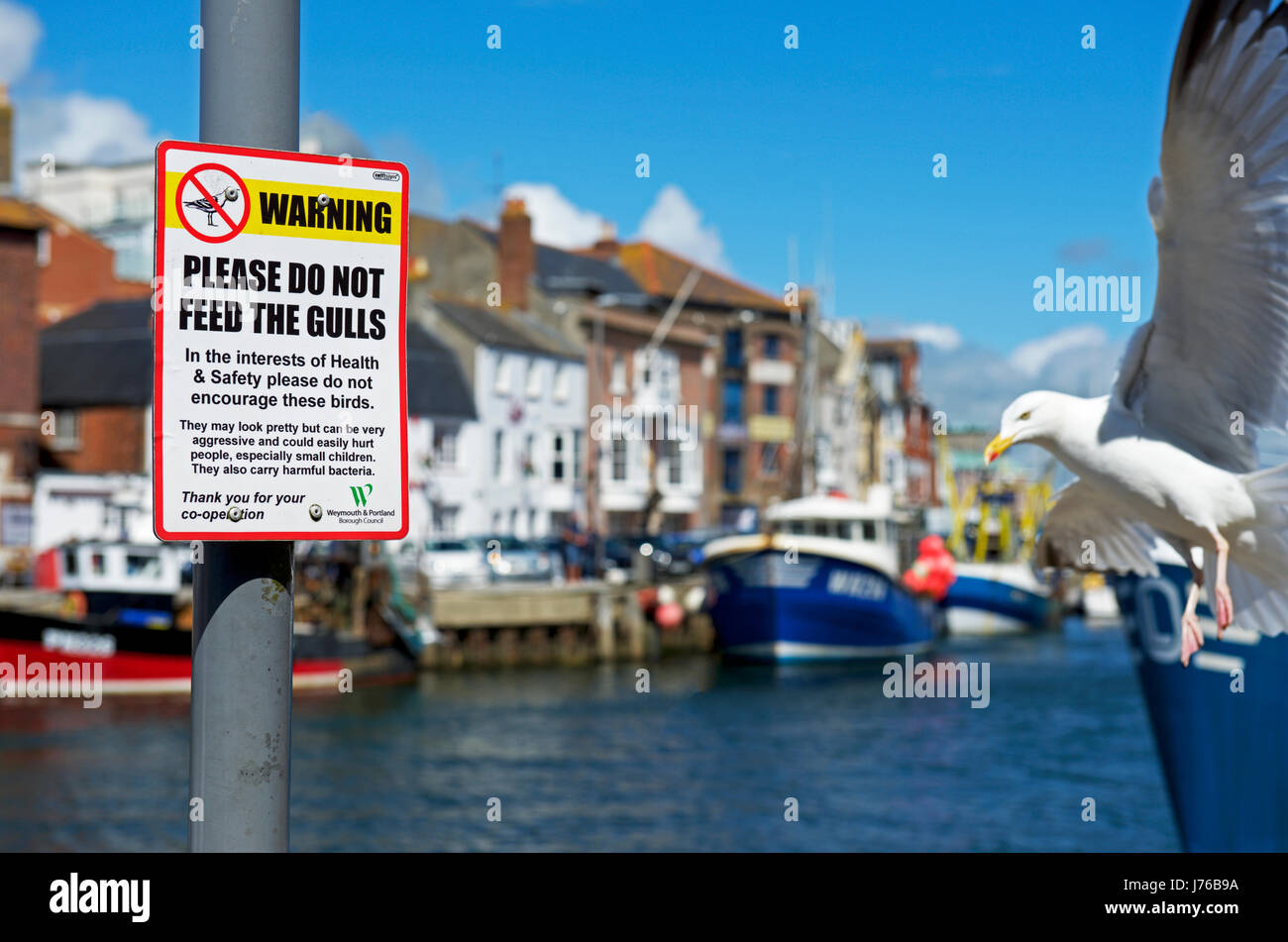 Sign - Please do not feed the gulls - Weymouth, Dorset, England UK Stock Photo