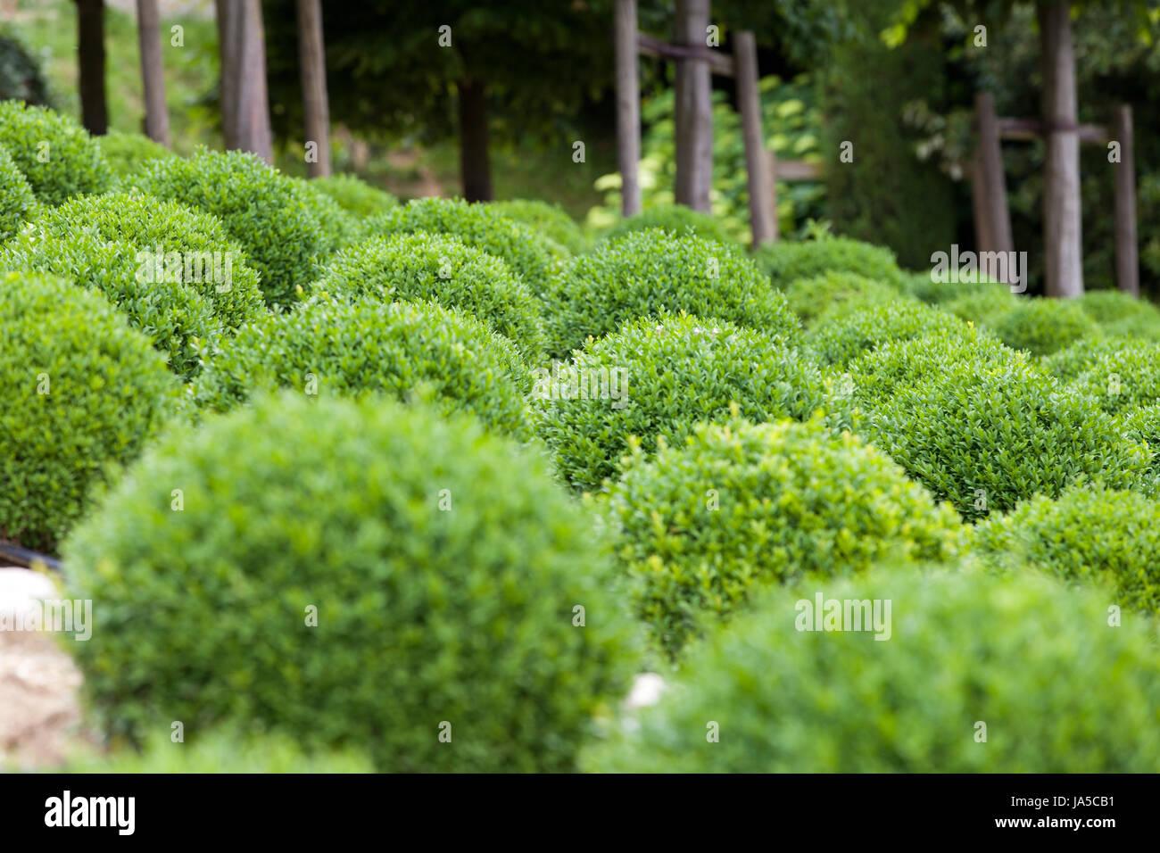 garden, ball, hedge, decoration, round, beautiful, beauteously, nice ...