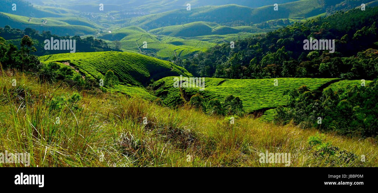 stock photo - beautiful kerala landscape and nature sceneries stock