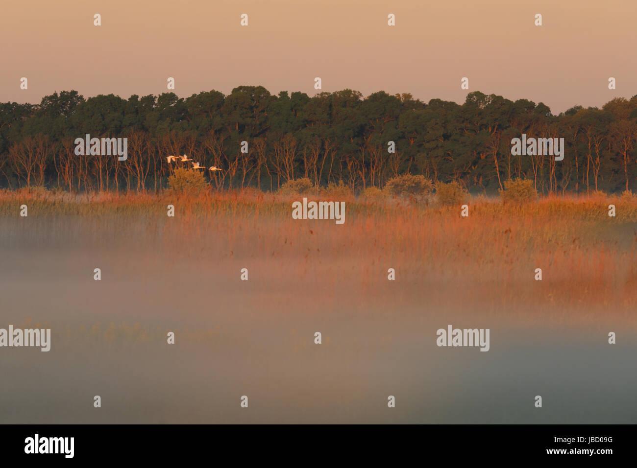 sunrise-in-the-danube-river-delta-in-rom