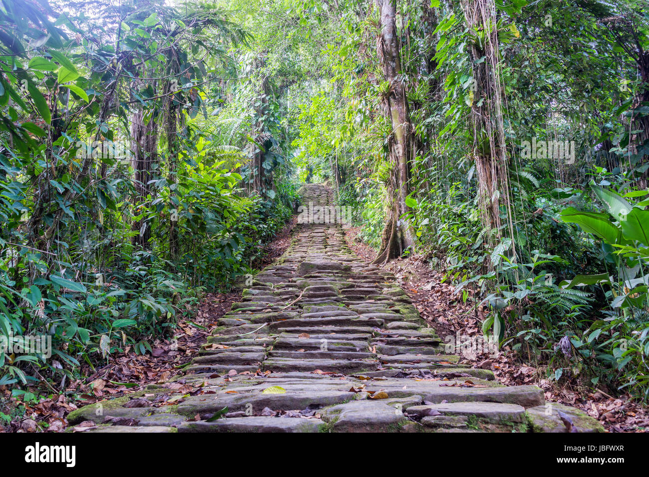 Stone stairs in the jungle at Ciudad Perdida, the lost city of Colombia Stock Photo