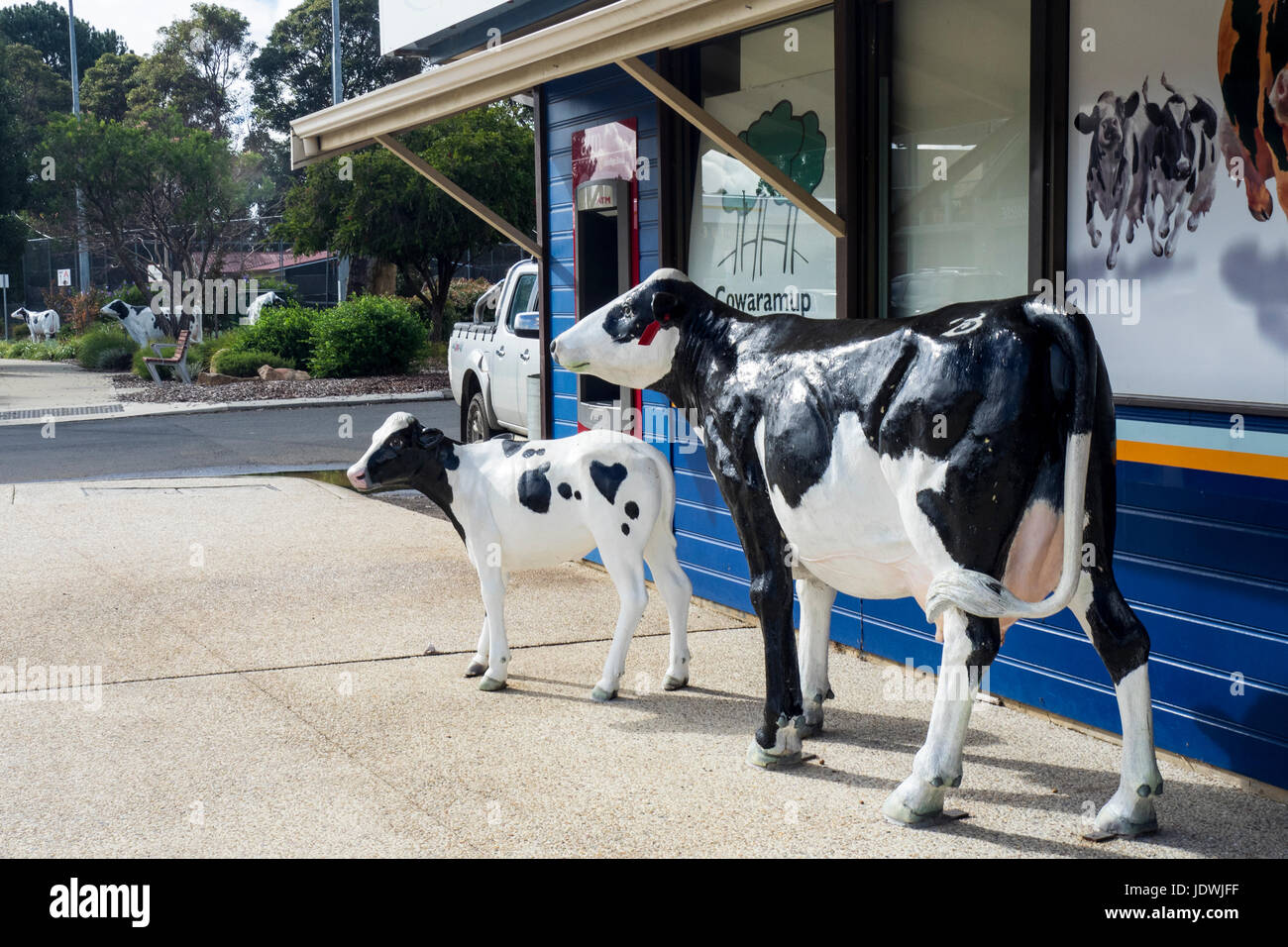 two-life-size-fibreglass-cow-sculptures-in-cowaramup-western-australia-JDWJFF.jpg