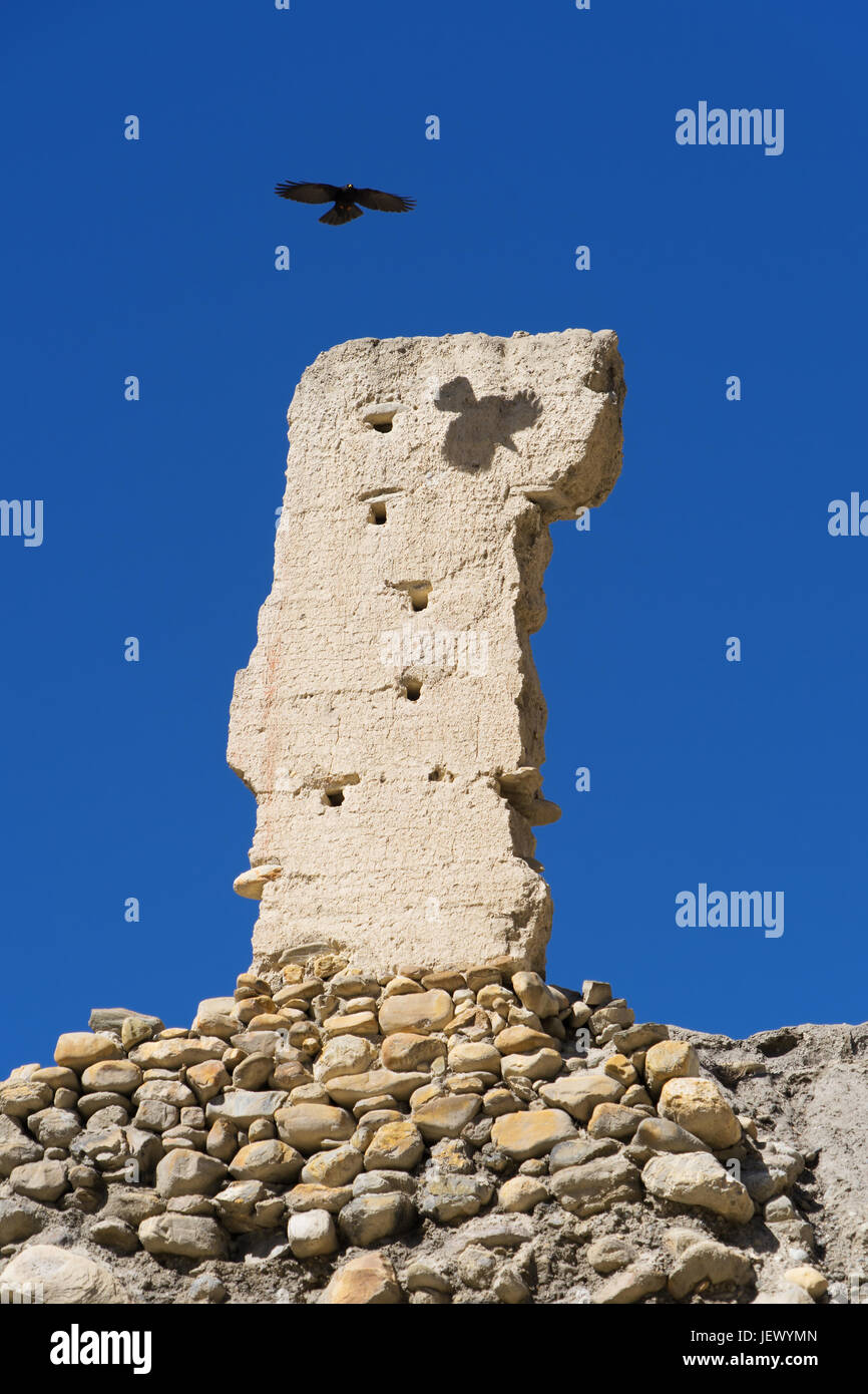 alpine-chough-soaring-over-the-ruins-of-an-ancient-gompa-in-chuksang-JEWYMN.jpg