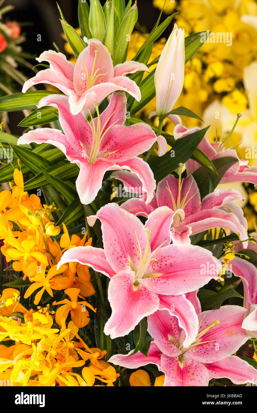 pink-lilies-lilium-and-yellow-orchids-ma