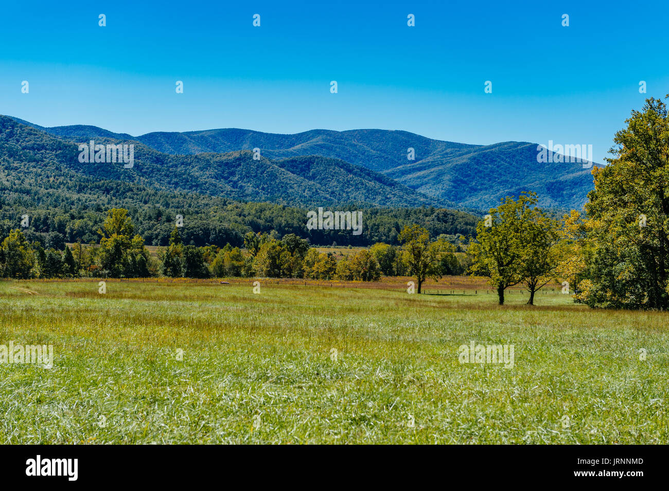 Great Smokey Mountains National Park as seen from Cades Cove, a narrow valley near Townsend, Tennessee, USA. Stock Photo
