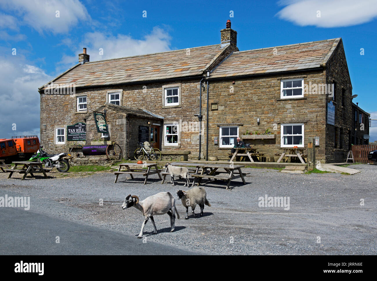 sheep-crossing-road-at-the-tan-hill-inn-the-highest-pub-in-the-country-JRRN6E.jpg