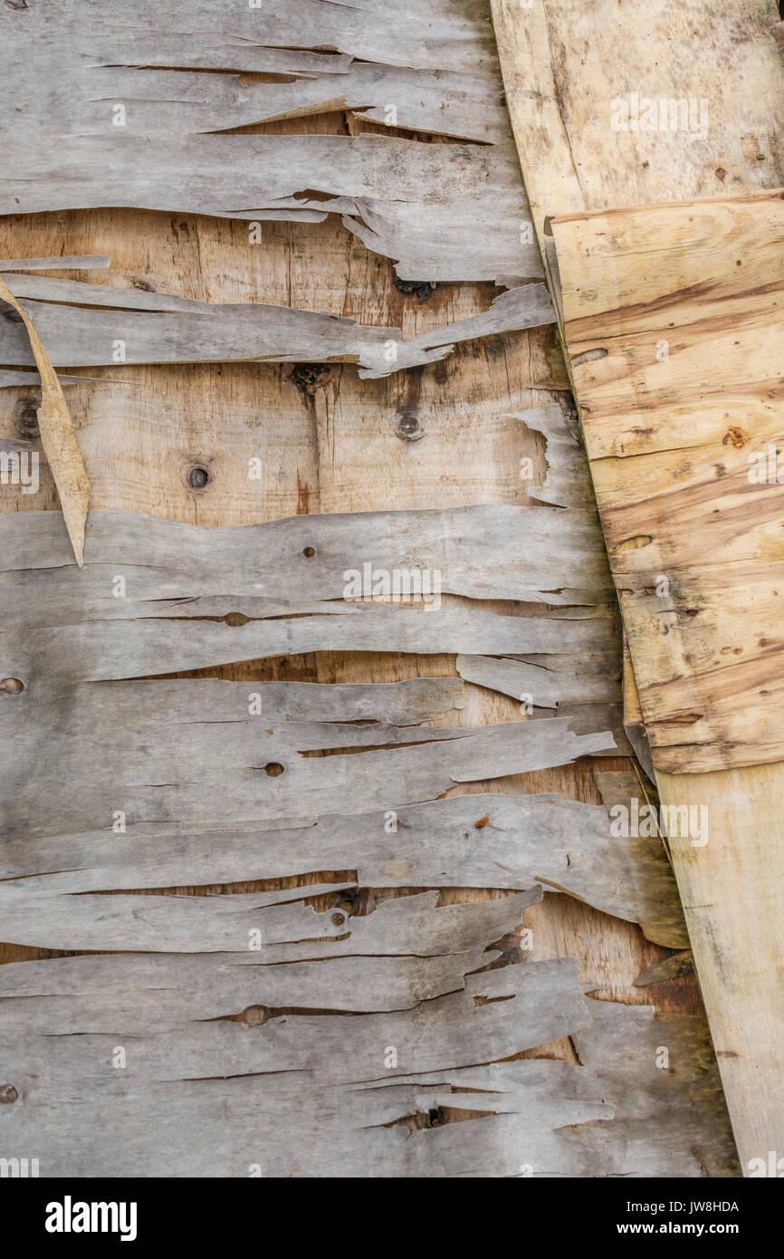 Decaying plyboard flaking and peeling. - Stock Image