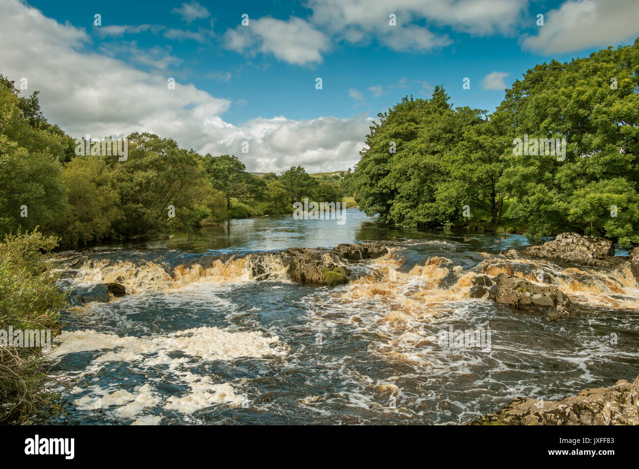 teesdale-landscape-the-river-tees-between-low-force-and-high-force-JXFF83.jpg
