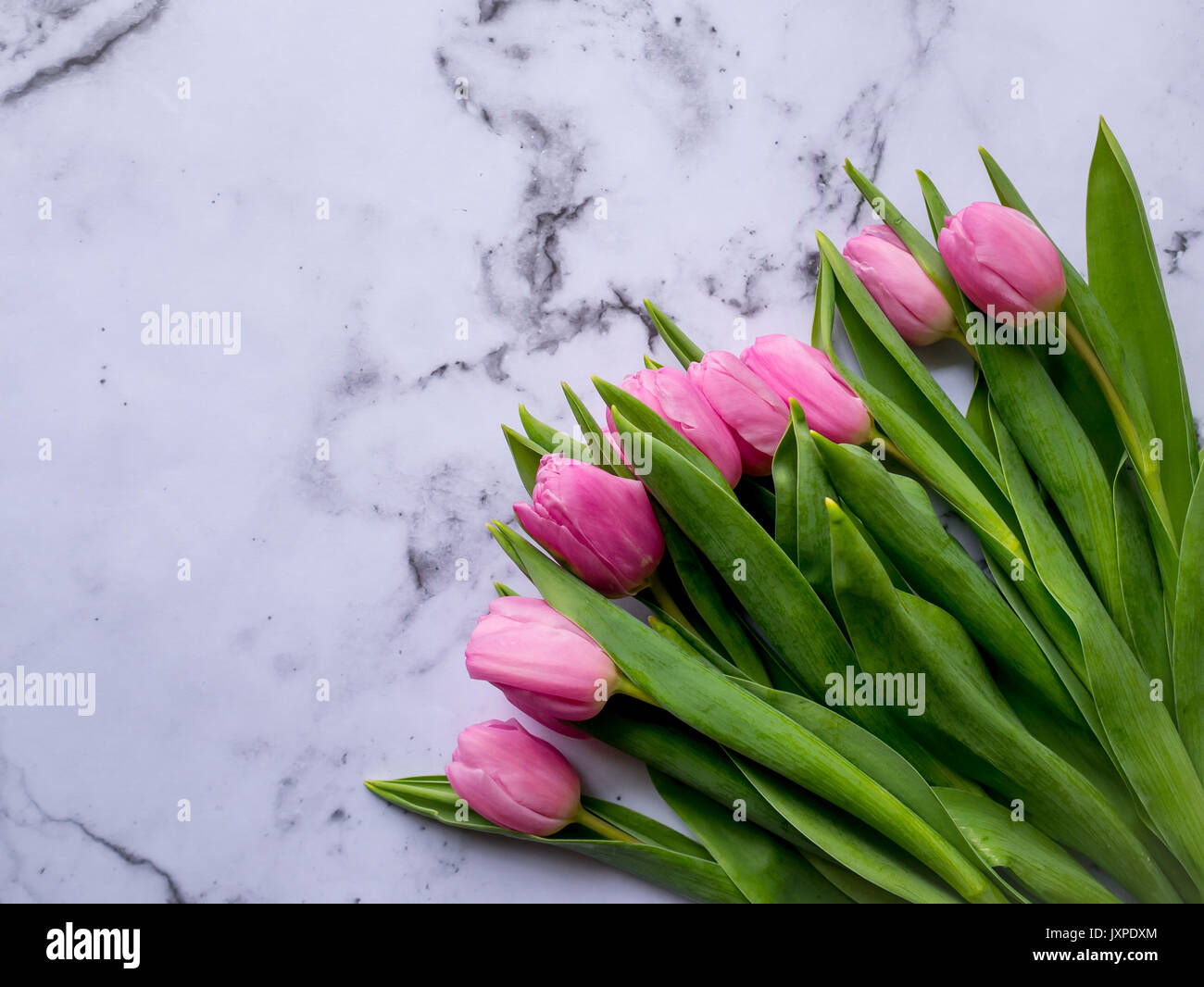 Bunch of pink tulips on a marble table. Flat lay. Landscape format. - Stock Image