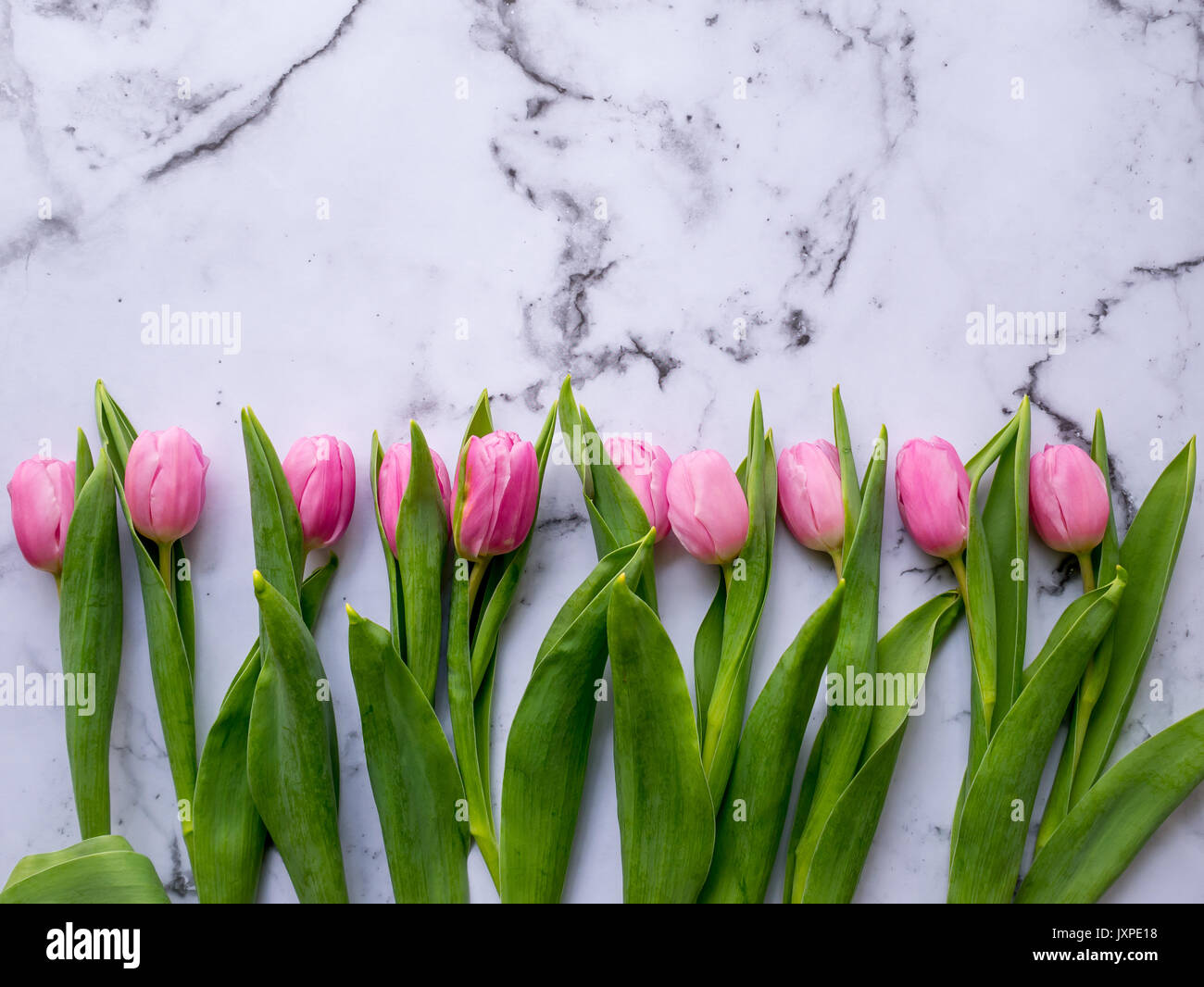 Pink tulips arranged in a line on a marble table. Flat lay. Landscape format. - Stock Image