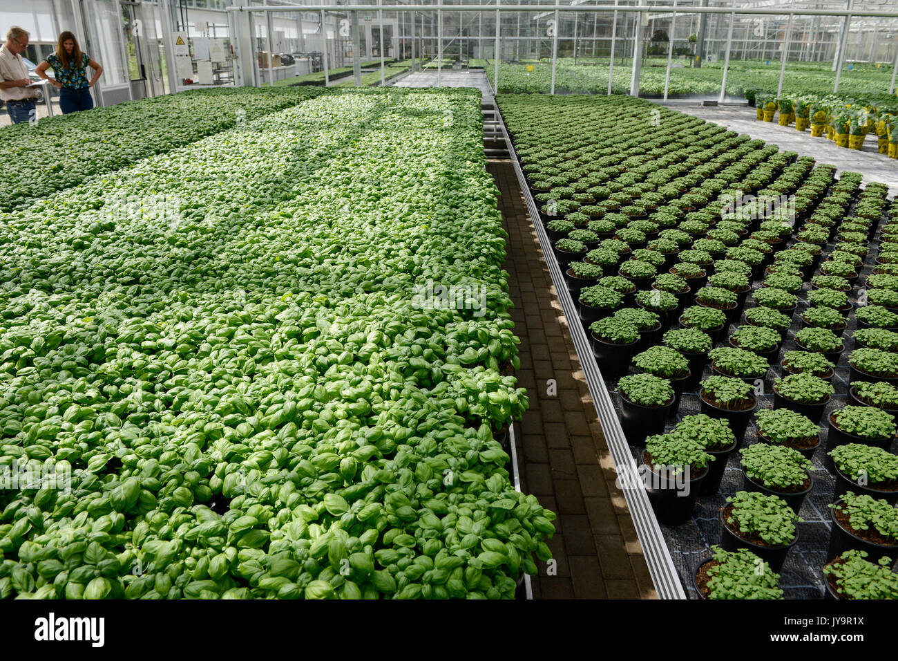 berlin germany urban gardening in stock photos berlin germany urban gardening in stock images. Black Bedroom Furniture Sets. Home Design Ideas