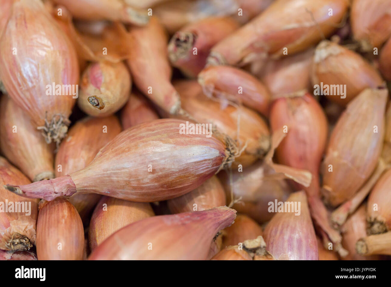 Lots of shallot on a market stall. Seen in Macro. - Stock Image