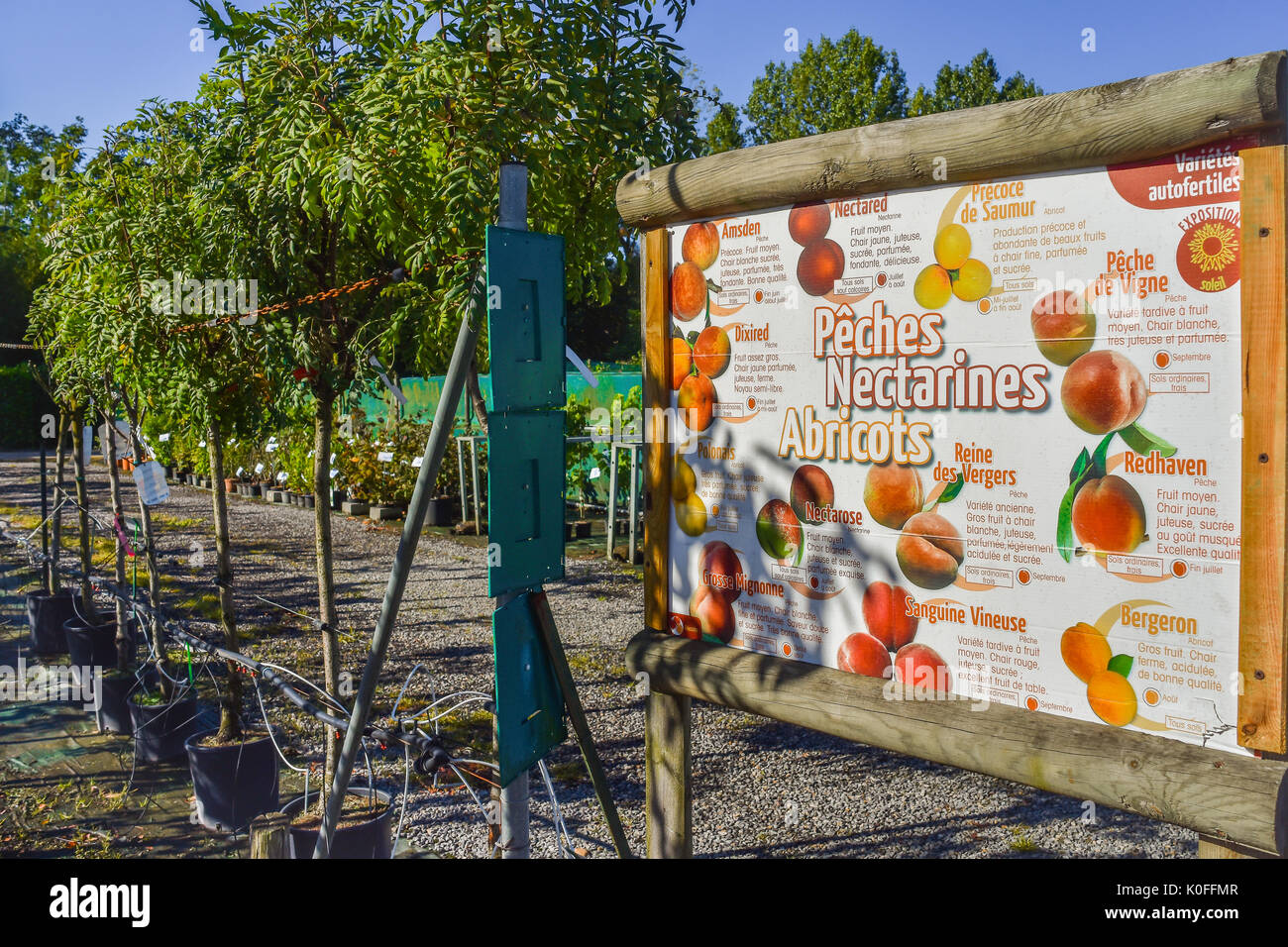 Plant nursery, France. - Stock Image
