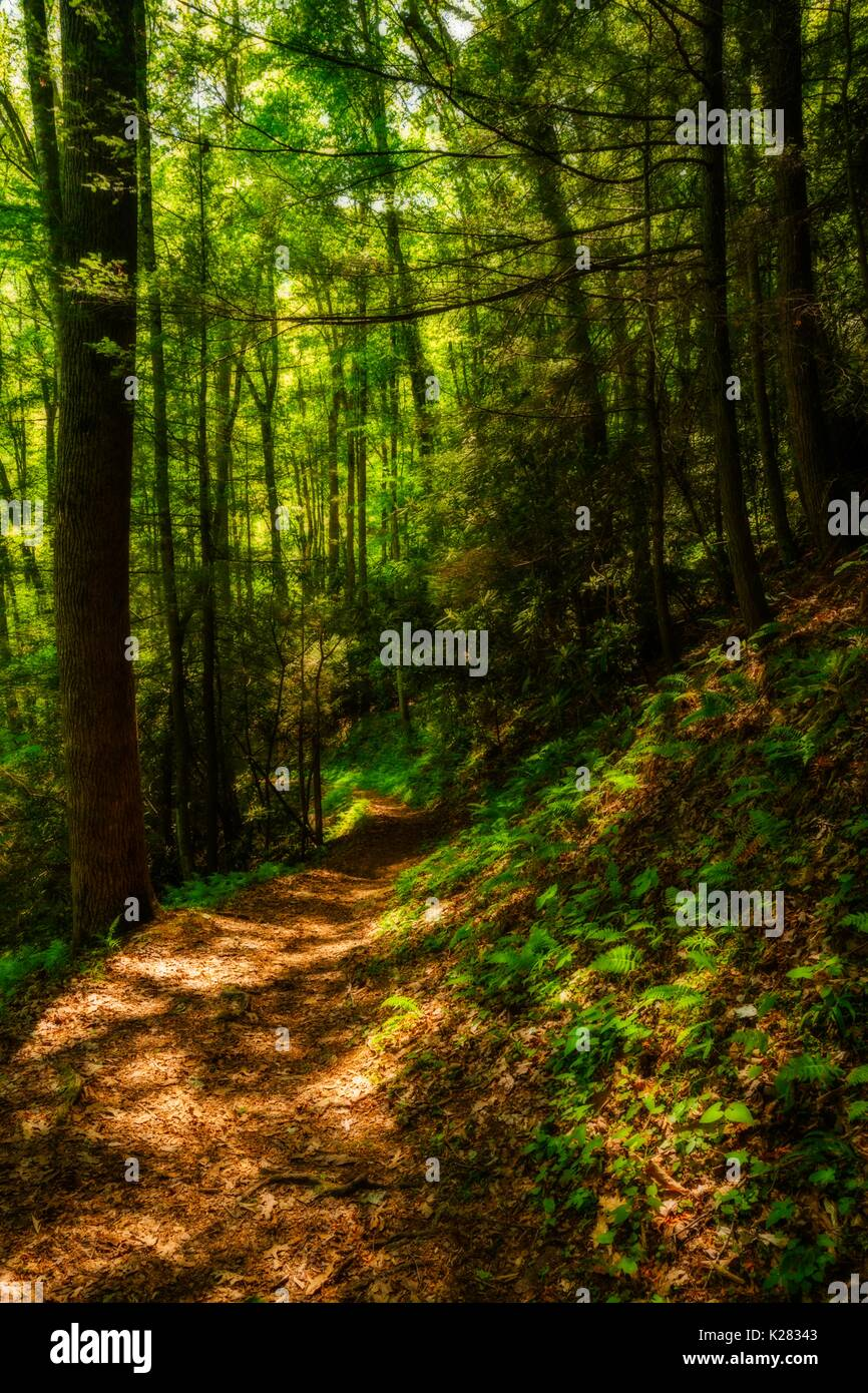 Meigs Creek Trail (Orton Effect) in the Great Smoky Mountains National Park, TN - Stock Image