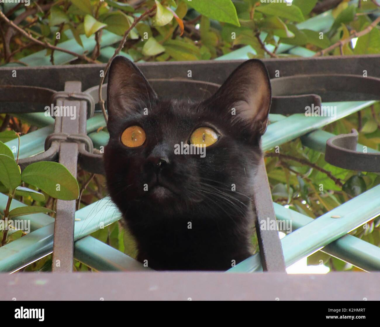 Curiosity killed the cat - Stock Image